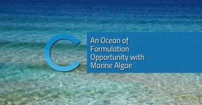 Marine Algae Opportunity