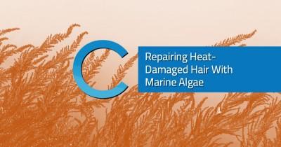 Heat Damaged Hair Marine Algae