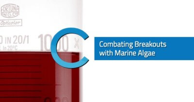 Combating Breakouts Algae