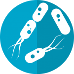 Skin Microflora Bacteria