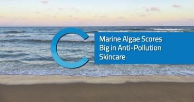Marine Algae Anti-Pollution
